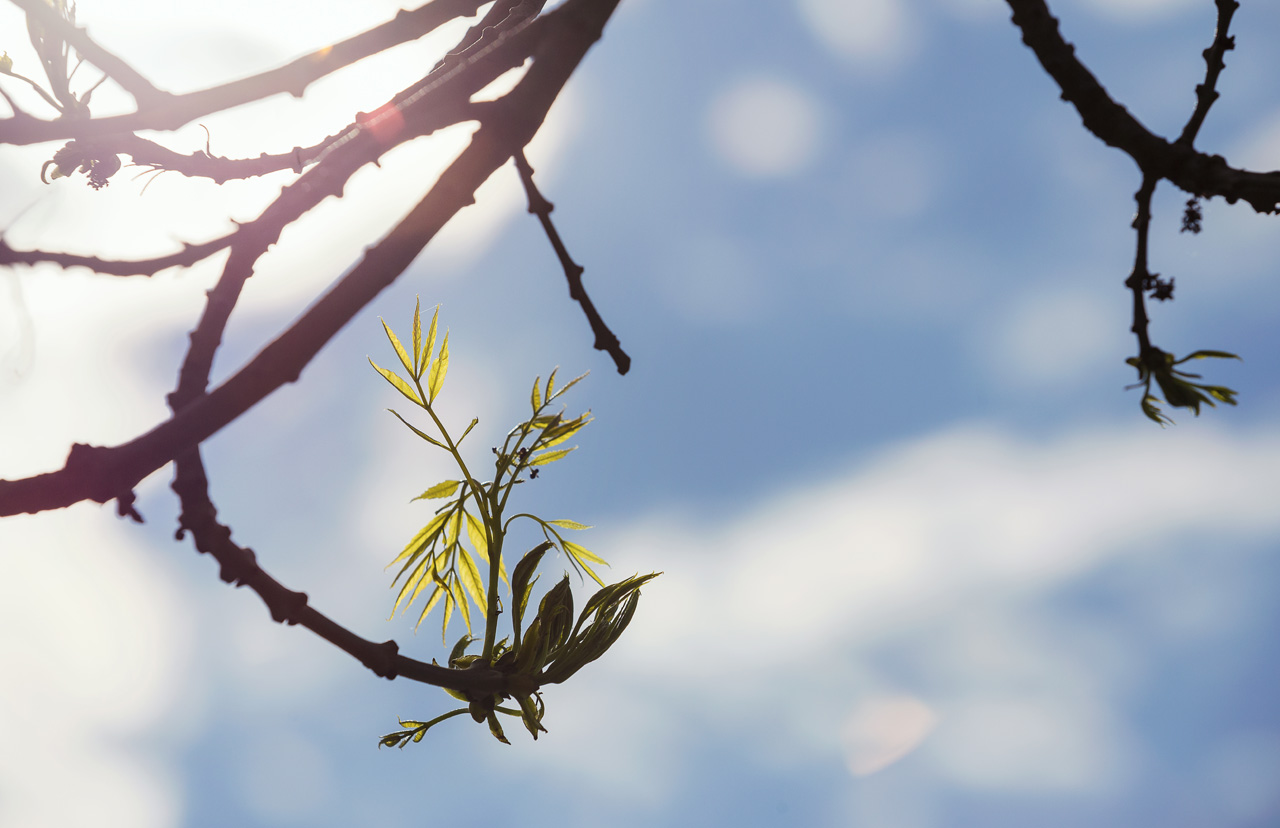 Geborgenheit und Harmonie im Frühling