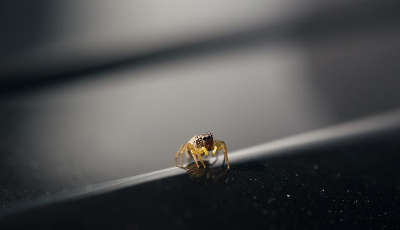 3mm spider